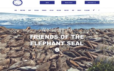 The Development of ElephantSeal.org